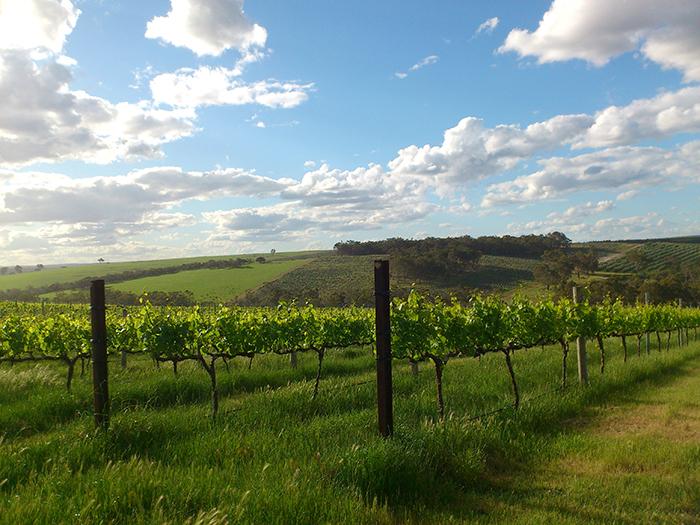 Regional Venue- Plantagenet Wines