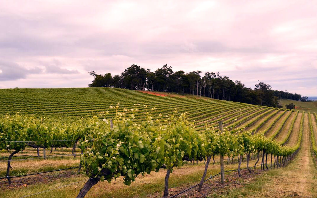 Wineries in Geographe