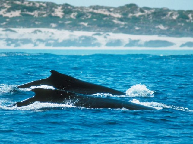Whale Watching in the Golden Outback