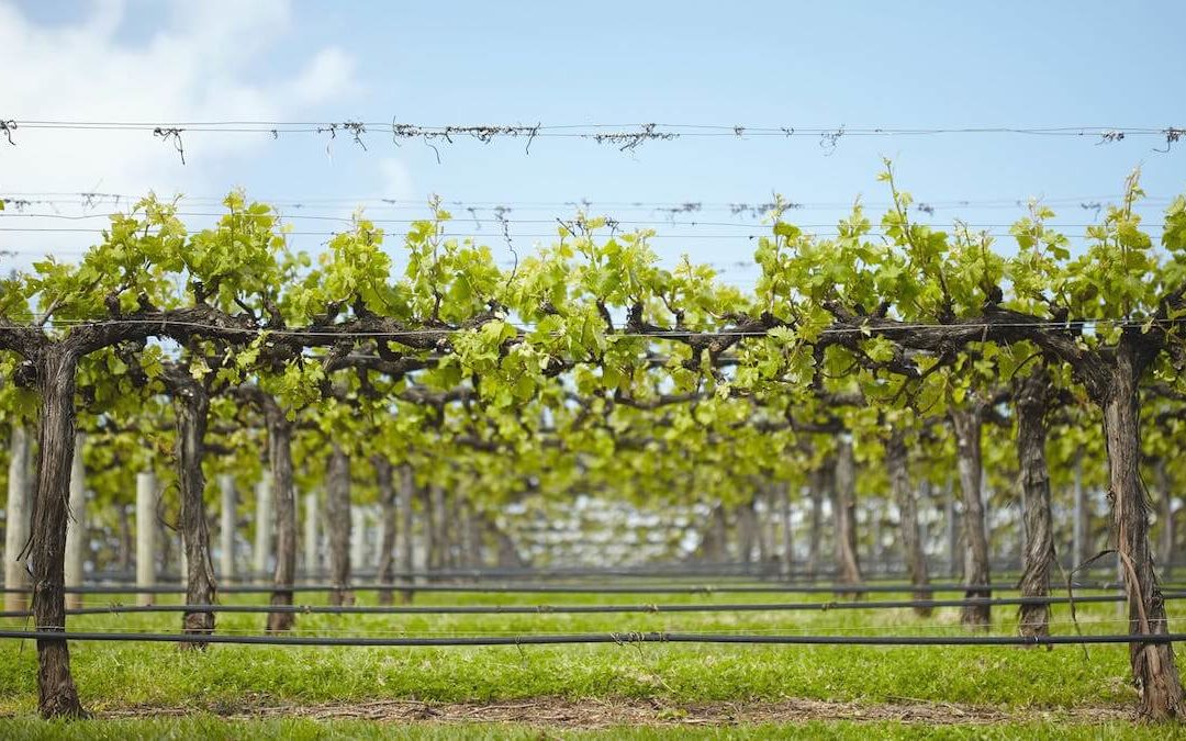 Wineries in Great Southern