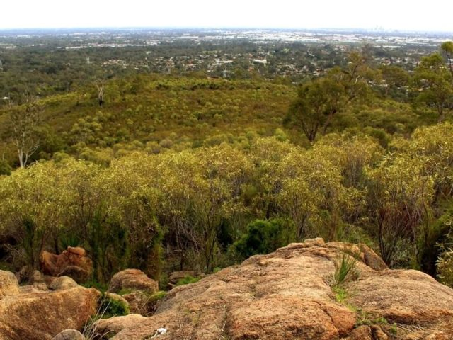 Dog-friendly hiking trails in the Perth Hills