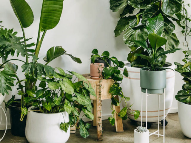 Five indoor house plants even you'll struggle to kill, including the mother-in-law's tongue