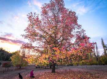 Discover Balingup, listed in Qantas' top five places in Australia to see autumn colours