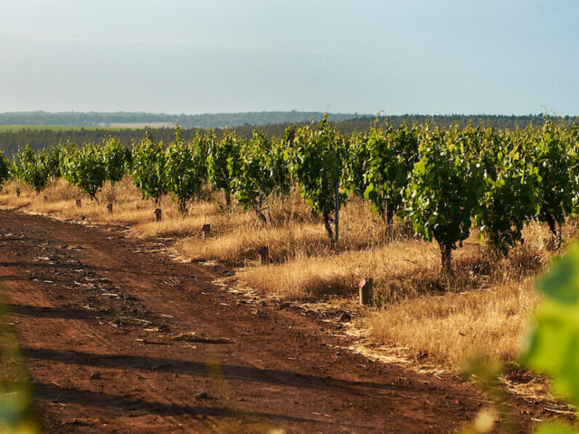 Great Southern wineries outperform in 2020 national wine review