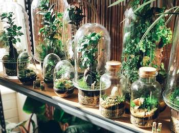 How to start and maintain a flourishing terrarium in Perth – who wouldn't want one?