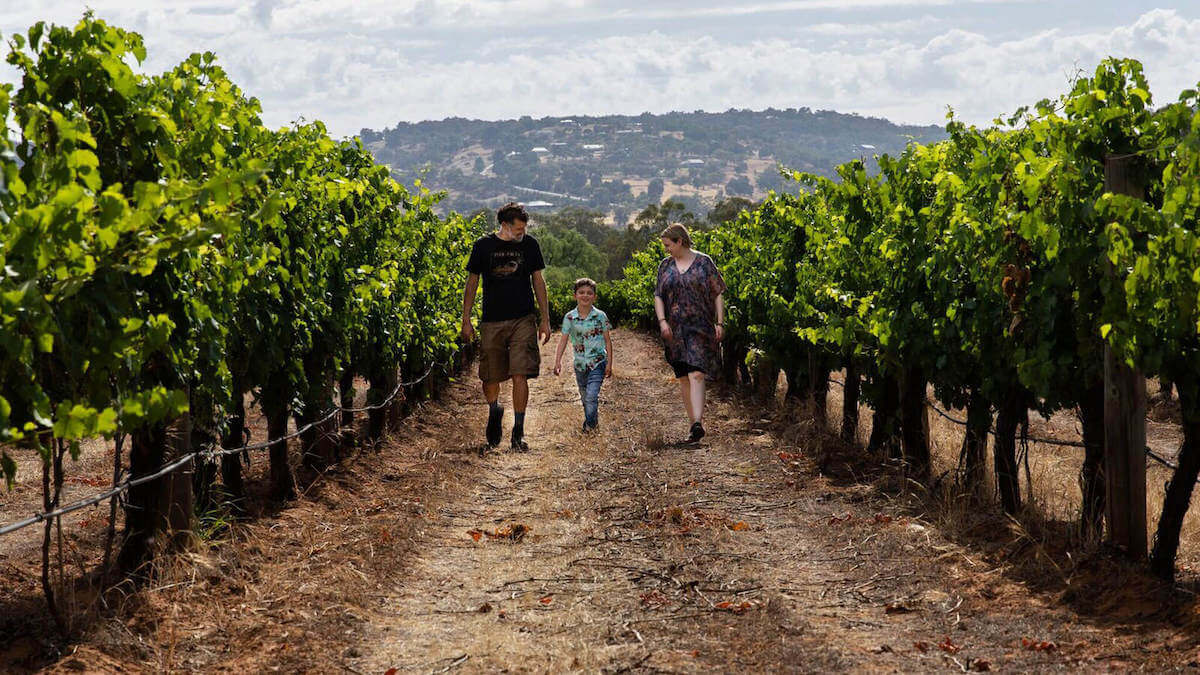 A man and woman and child walk through a vineyard.