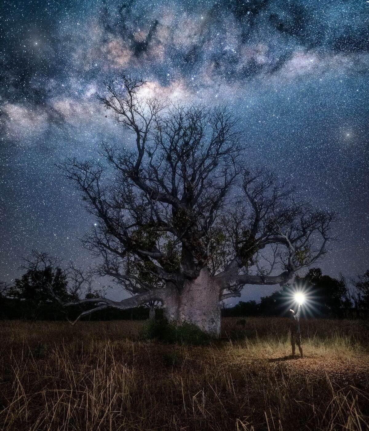Night photography of Boab Tree