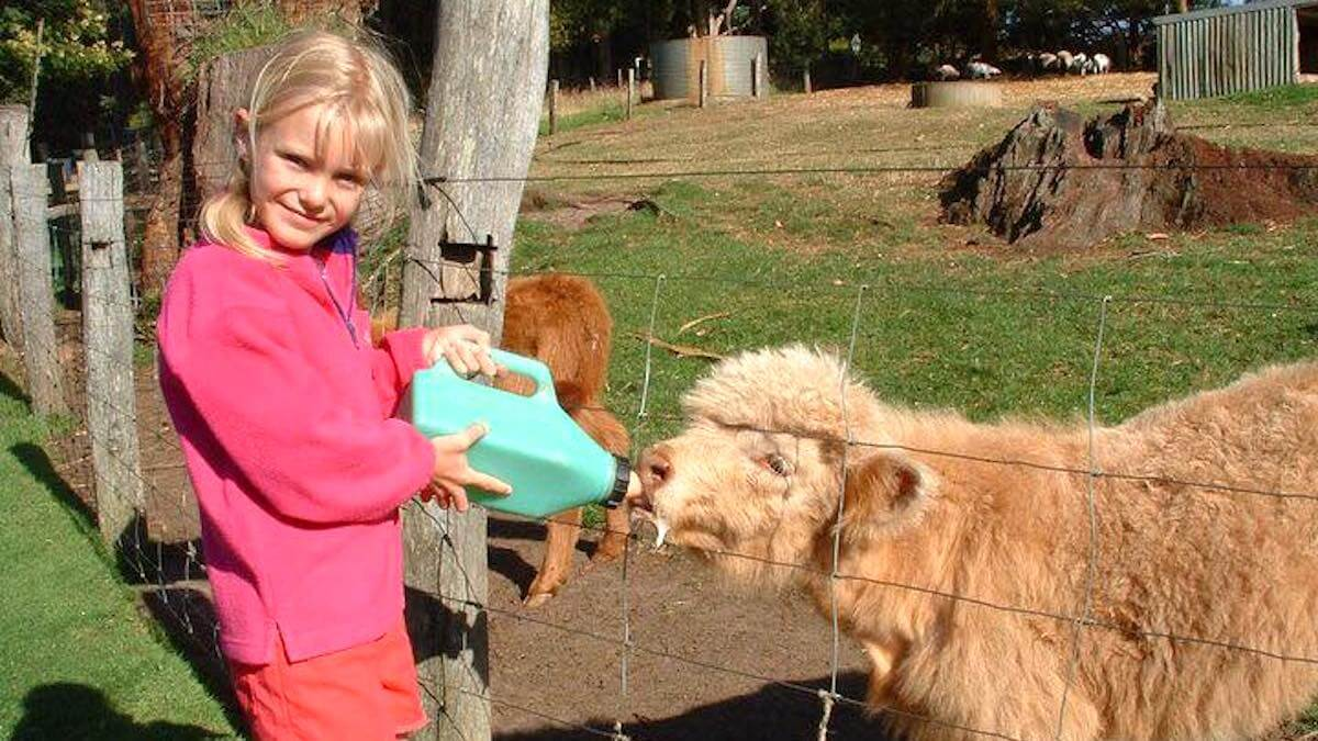 A child with blonde hair and a bright pink jumper bottle feeds a baby cow through a fence