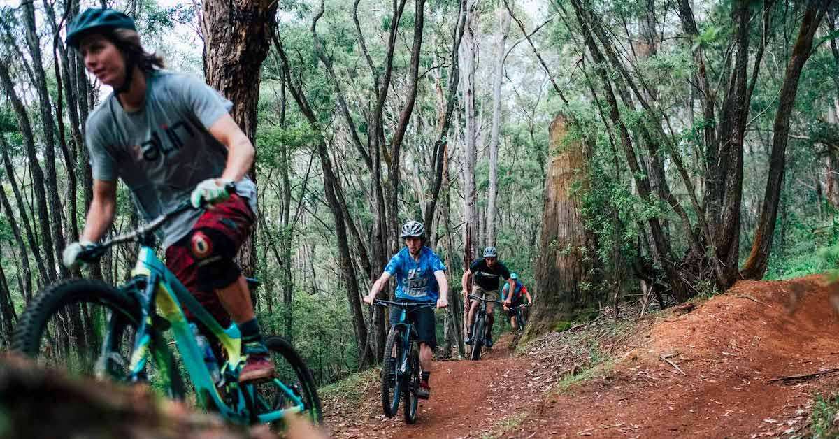 Group of cyclists biking through Boranup forest