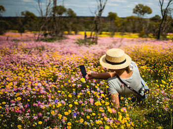 Best Wildflower Trails in the Coral Coast: it's closer and easier than you think