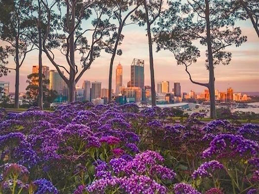 Kings Park Festival kicks off with the world's biggest display of Western Australian wildflowers