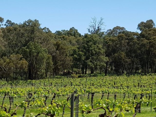 Stunning wineries in the Chittering Valley, just one hour from Perth