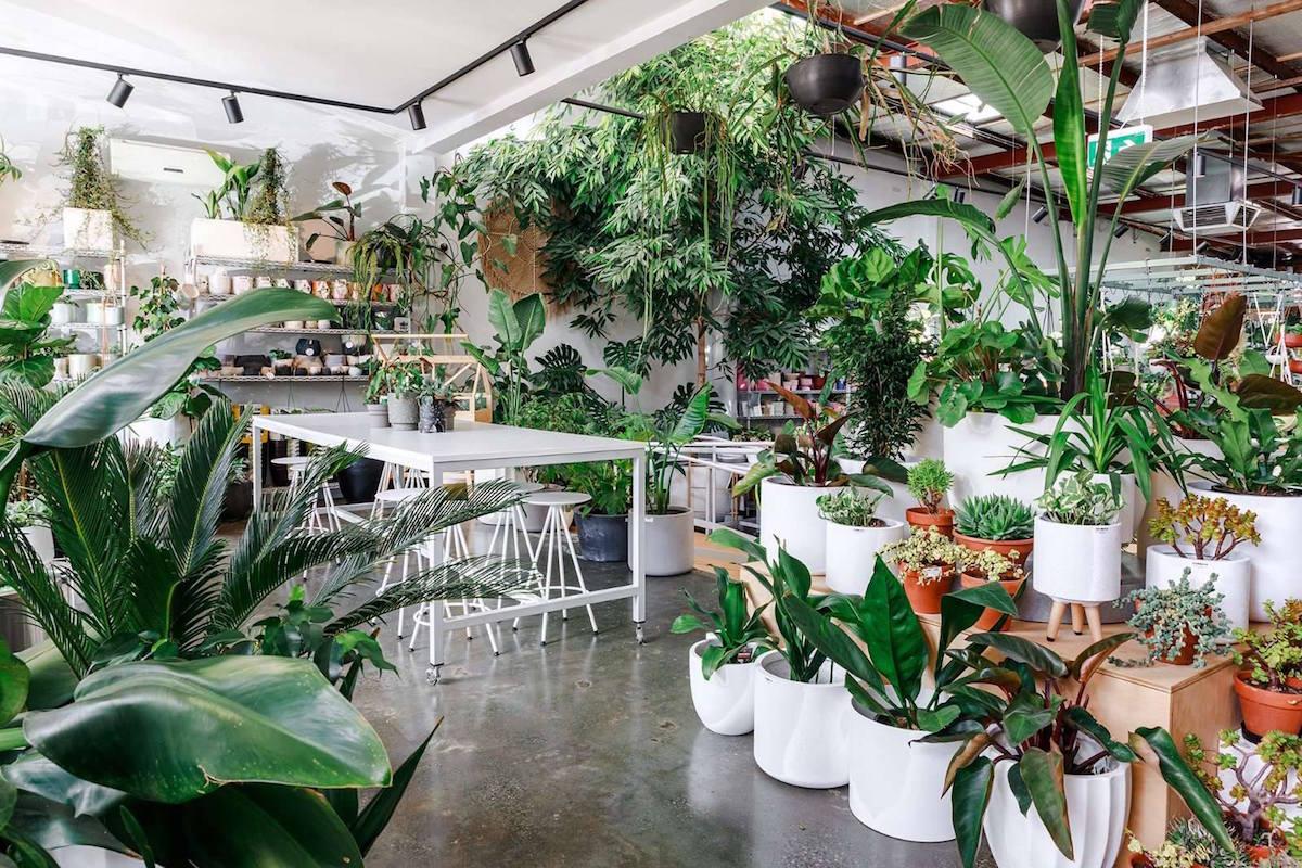 the plants looking like a garden inside Bar Botanik