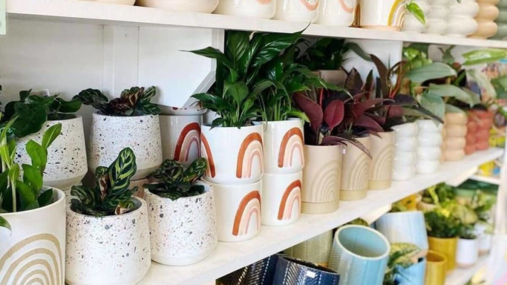 Plant pots and plants from Green Bunch