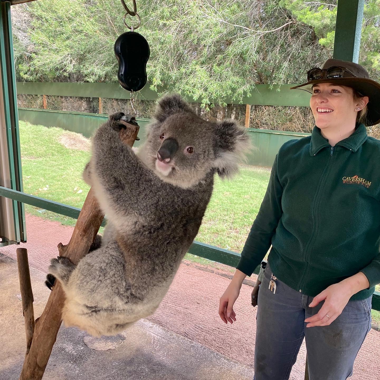Koala and staff member at wildlife park