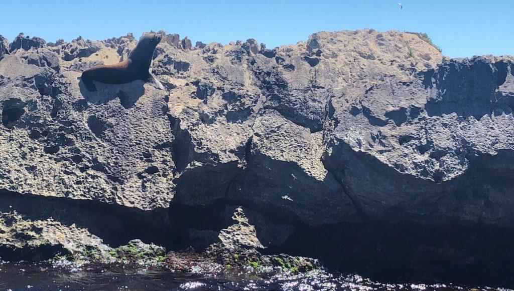 seal on rocks at Rottnest