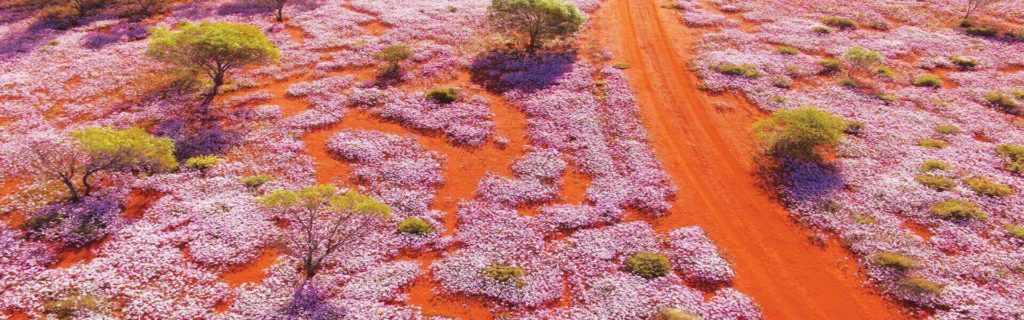 Top 10 wildflower day trips and 23 walking trails close to Perth